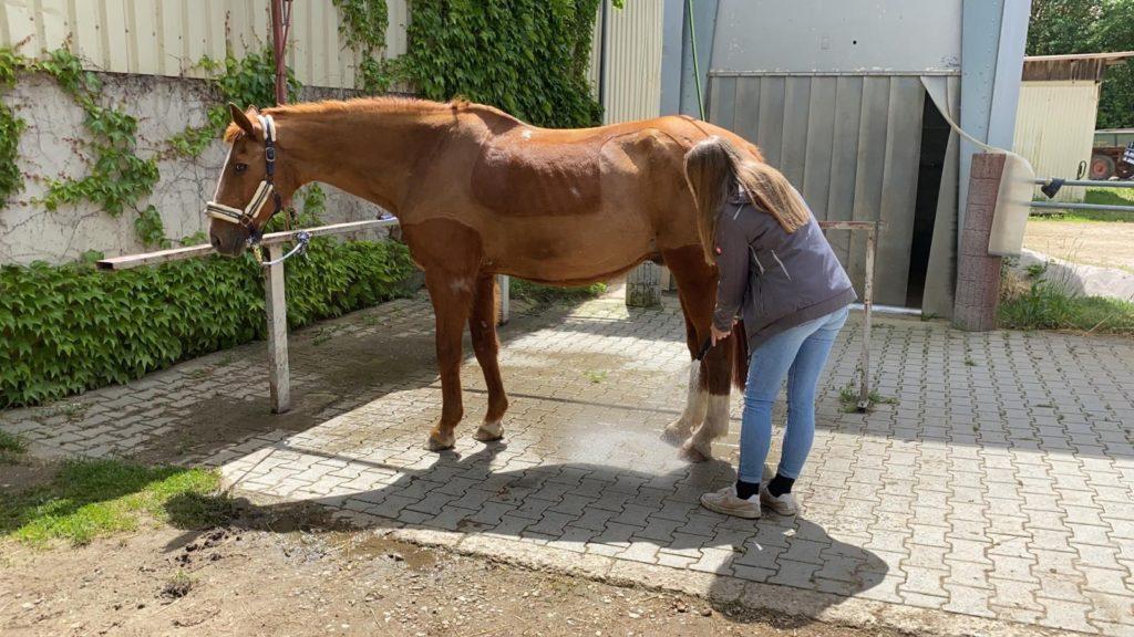 Putz und Waschplatz zur intensiven Pferdepflege